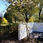 magnolia tuinmuur